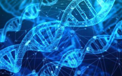 Magyar Fajta projekt – DNS minta leadási lehetőség